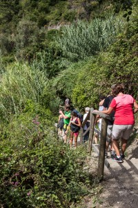 Here's a typical section of the hiking trail between Vernazza and Corniglia: steep, narrow, and crowded.