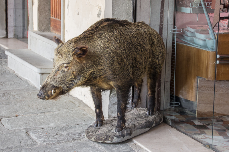 Stuffed boar advertising a butcher shop in Greve